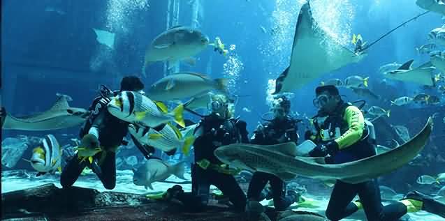 Photo of الغوص مع أسماك القرش أحدث ألعاب أكوافينتشر