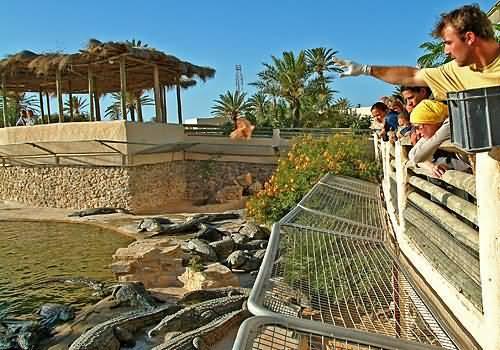 صورة حديقة دبي للتماسيح الأولى من نوعها في المنطقة