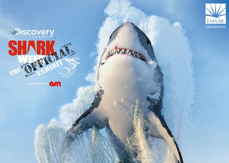Photo of بالفيديو .. أسبوع أسماك القرش في دبي