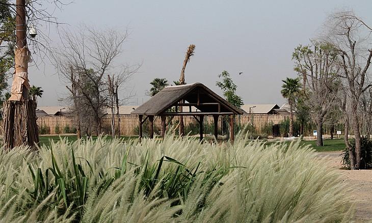 Photo of بالصور .. جولة داخل حديقة سفاري دبي المرتقبة