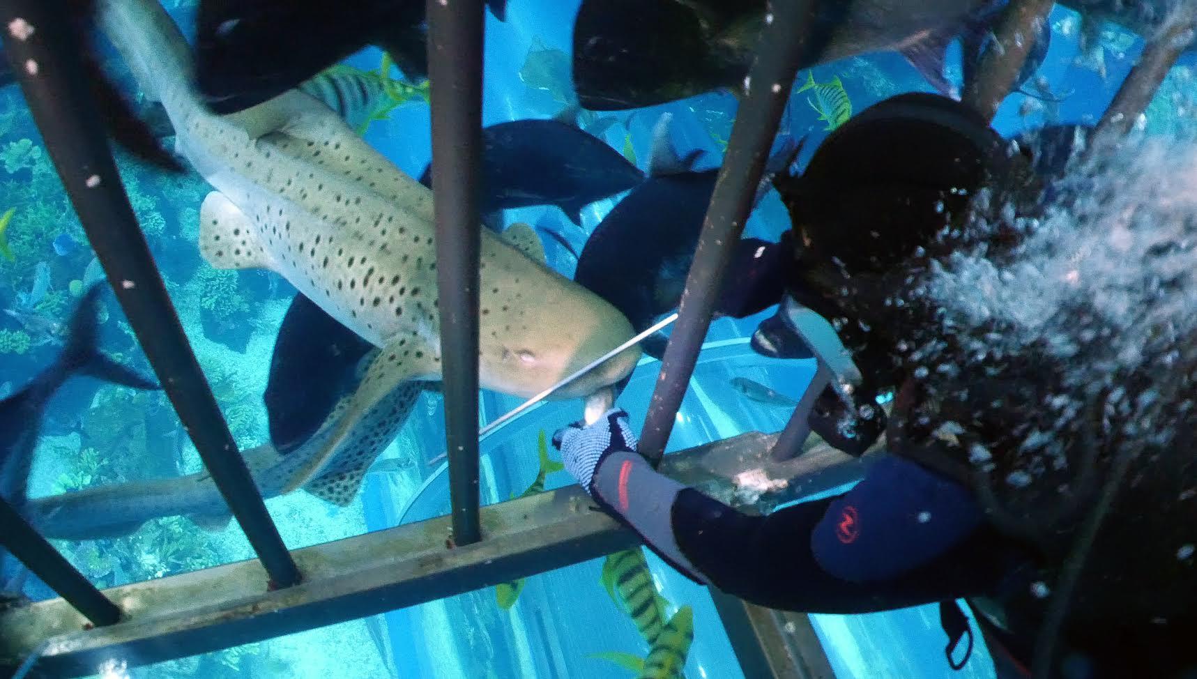 Photo of إستمتعوا بتجربة لقاء القرش في دبي أكواريوم