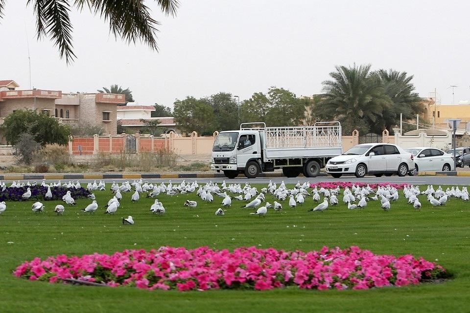 Photo of أجمل الصور الملتقطة في الإمارات خلال الأجواء الشتوية