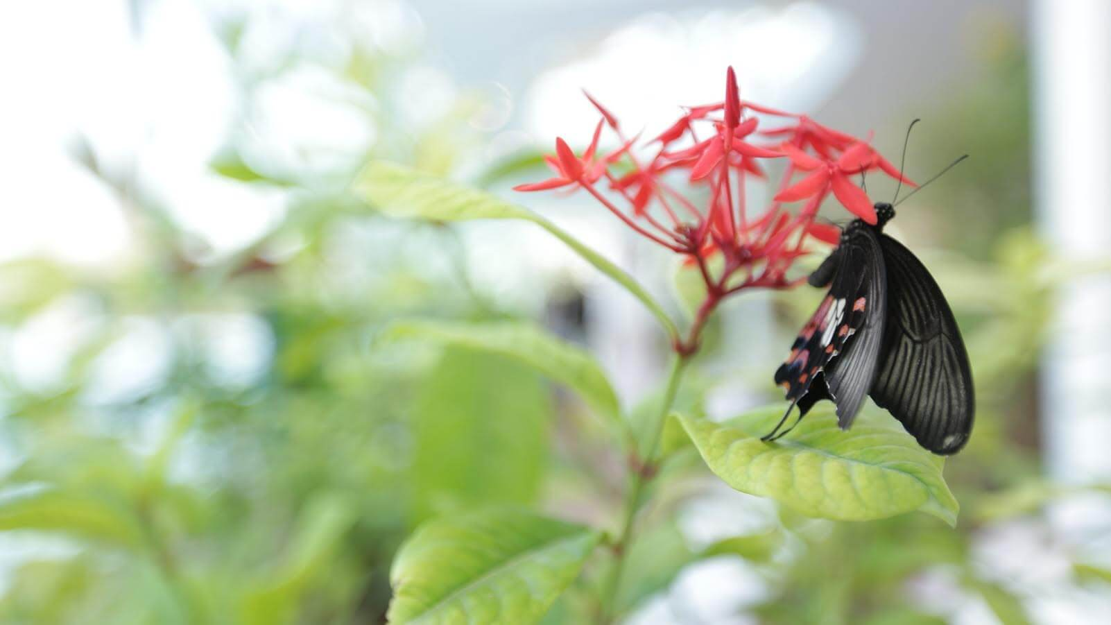 Photo of إحتفل بيوم اكتشاف عالم الفراشات في جزيرة النور بالشارقة