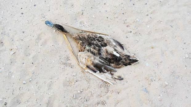 تعرف على سبب موت العديد من الطيور والأسماك في بحيرات القدرة بدبي ؟