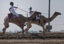 دبي تستضيف ماراثون اليوم الوطني للهجن إحتفالاً بعيد الإتحاد 2017