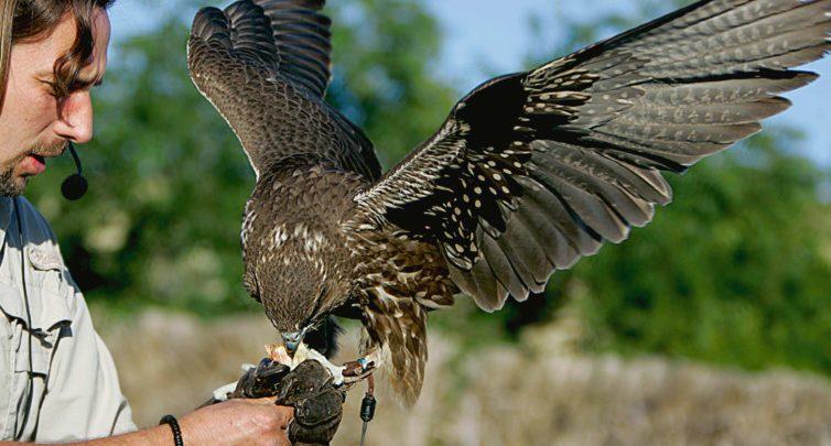 عقوبة صيد الطيور المهاجرة