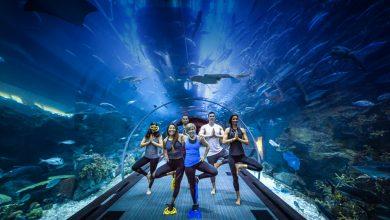 Photo of دبي أكواريوم وحديقة الحيوانات المائية تستضيف فعاليات اليوجا تحت الماء 2018