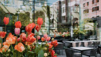 Photo of باقة توليبس إن من فندق كونسرفاتوار أمستردام