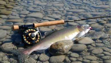 Photo of أفضل 3 أماكن لصيد السمك في الإمارات