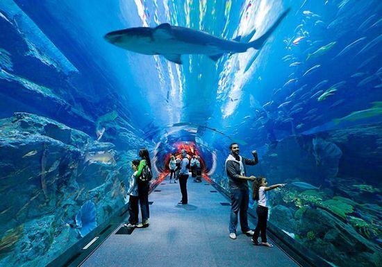 دبي أكواريوم وحديقة الحيوانات المائية