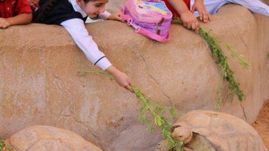صورة أنشطة المخيم الصيفي للأطفال من حديقة الإمارات للحيوانات