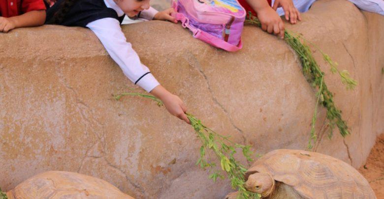 مخيم الأطفال الصيفي من حديقة الإمارات للحيوانات