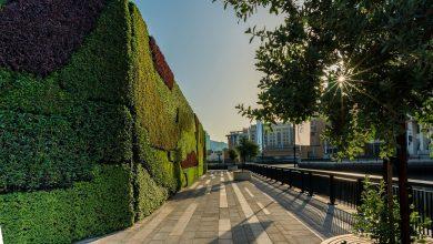 صورة أكبر جدار أخضر بالشرق الأوسط في دبي وورف
