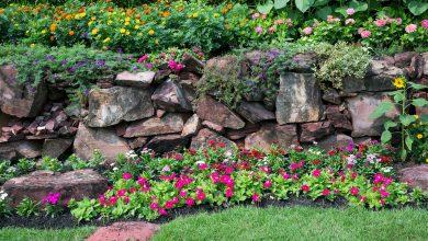Photo of 5 أنواع ورود لتزيين حديقة منزلك في دبي خلال الصيف