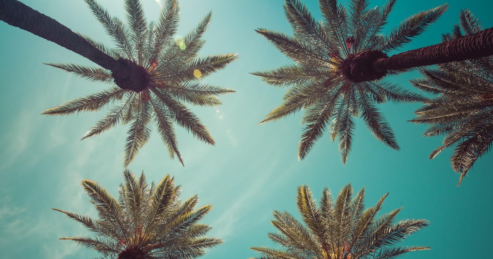 أشجار النخيل