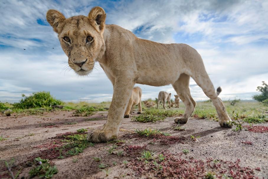 معرض صور الحياة البرية في مركز الغرير