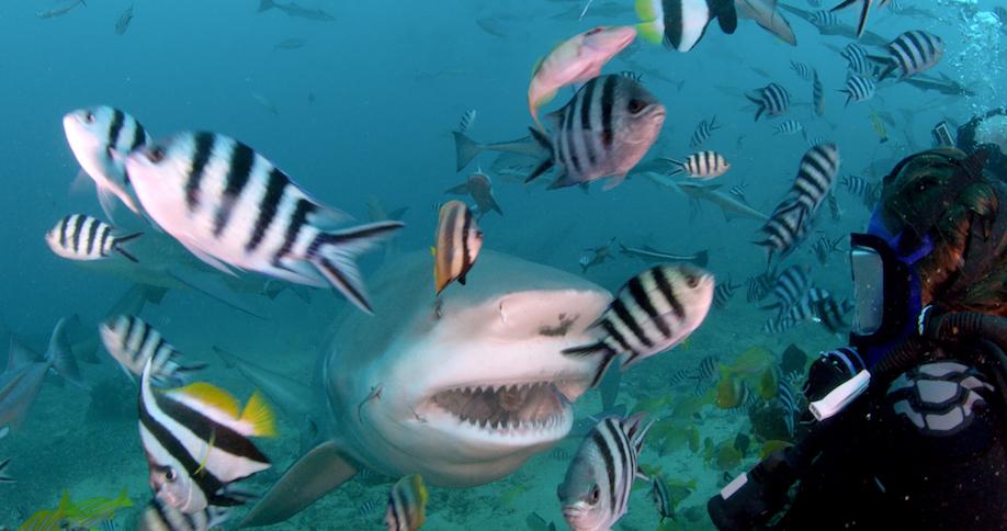 موسم جديد من شارك ويك أسبوع القرش على قناة ديسكفري