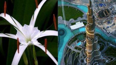 Photo of مصادر إلهام تصاميم 6 معالم سياحية أيقونية في دبي