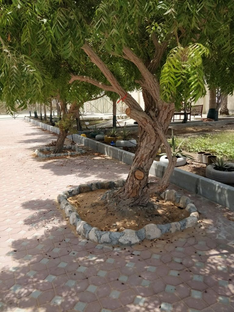 منطقة لعب للطالبات من منتجع سيكس سينسيز زيغي باي