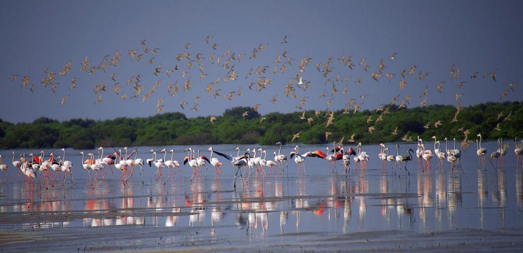 تجارب متنوعة من منتجع أوبيروي الشاطئي في الزورا