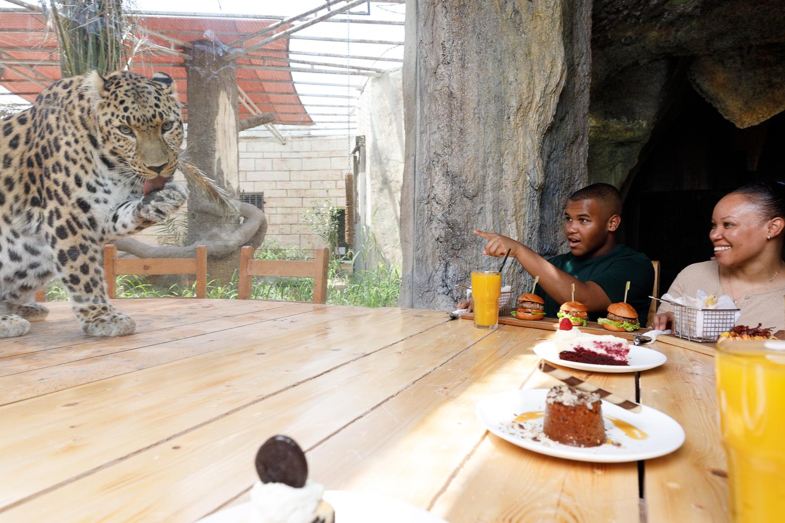 غداء برفقة الفهود في حديقة الإمارات للحيوانات