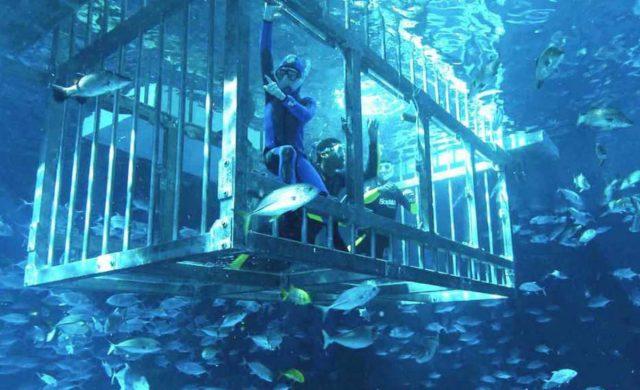 الغطس مع الحيوانات البحرية