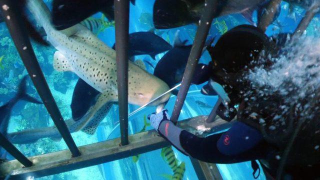 إطعام أسماك القرش Meet the sharks
