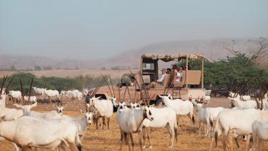 صورة عطلة الصديقات من أنانتارا في جزيرة صير بني ياس
