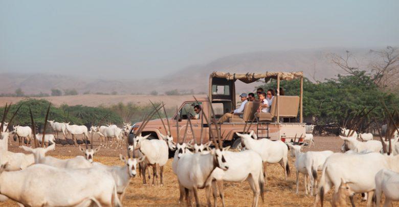 عطلة الصديقات من أنانتارا في جزيرة صير بني ياس