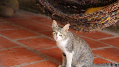 صورة يوم لتبني القطط من جمعية كيتي سنيب