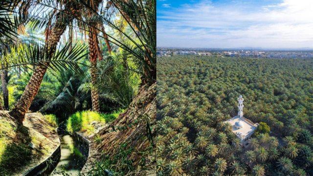 واحة النخيل في العين Palm oasis in Al Ain