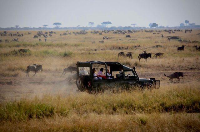 ماساي مارا في كينيا / تنزانيا Maasai Mara in Kenya/Tanzania