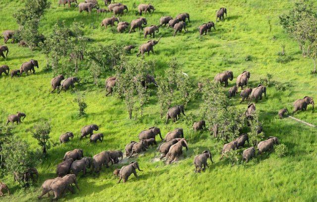 جنوب لوانغوا الحديقة الوطنية في زامبيا South Luangwa National Park in Zambia