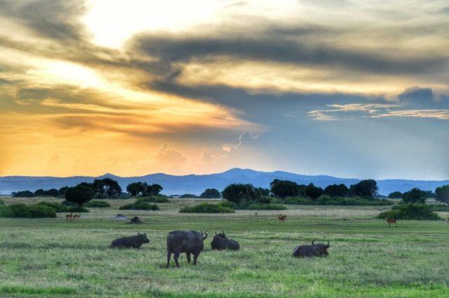 الحديقة الوطنية كروجر في جنوب افريقيا Kruger National Park in South Africa