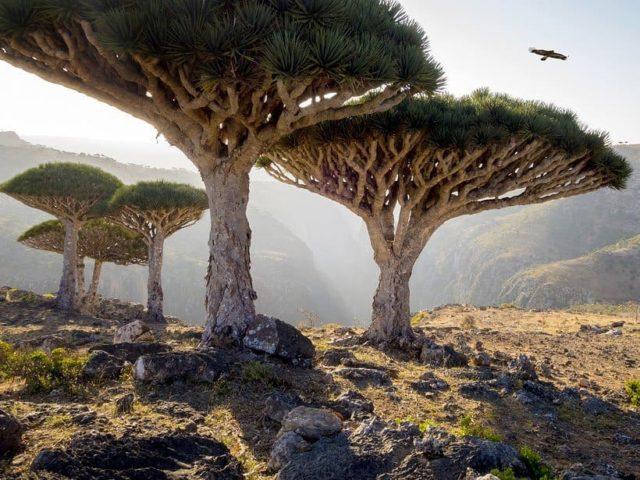 سقطرى ، اليمن Socotra, Yemen