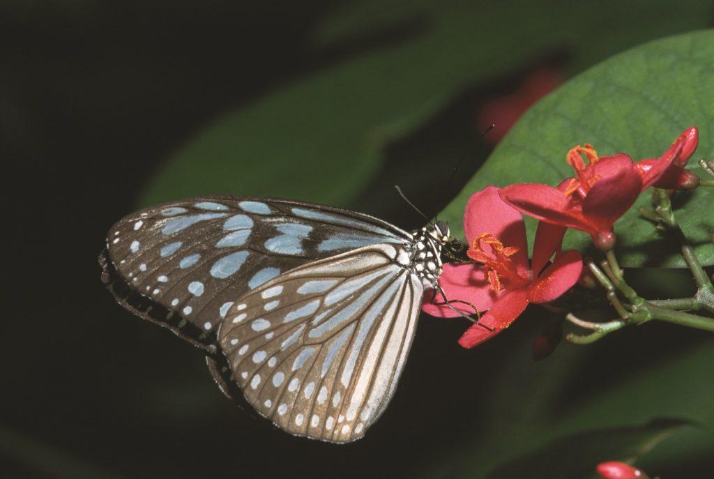 جولة داخل بيت الفراشات في جزيرة النور