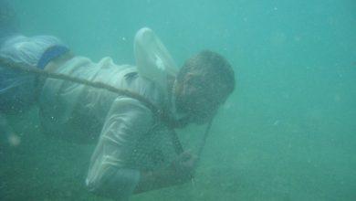 صورة رحلات سردال للغوص على اللؤلؤ في جزيرة ياس