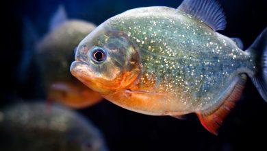 Photo of تعرف على الأسماك الجديدة في ذا جريين بلانيت
