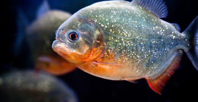 تعرف على الأسماك الجديدة في ذا جريين بلانيت
