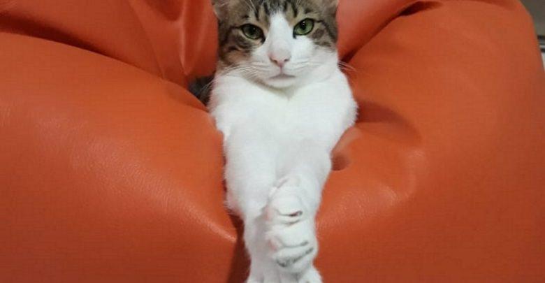 أيام تبني القطط من جمعية كيتي سنيب في دبي