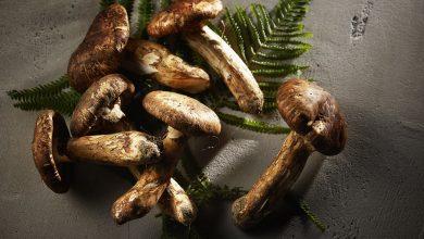 Photo of قائمة أطباق الفطر من مطعم ذا فورج