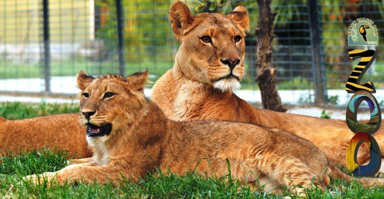 أجمل 5 فنادق رائعة قريبة من حدائق الحيوانات الشهيرة حول العالم