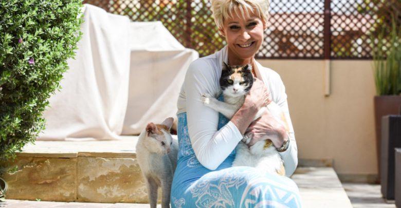 جمعية كيتي سنيب تتبنى القطط المريضة والمهملة وتمنحها مأوى دائم