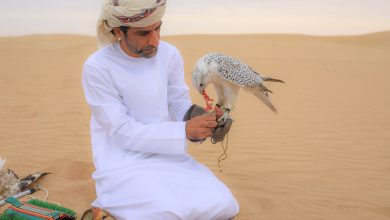 Photo of بالفيديو إستكشفوا أول محمية للطيور في دبي