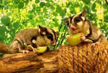 تعرفوا على الأنواع الجديدة والنادرة من الحيوانات في ذا جرين بلانيت