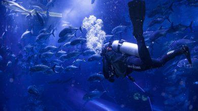 Photo of دبي أكواريوم وحديقة الحيوانات المائية تقدم خصم 25% على أبرز مغامراتها