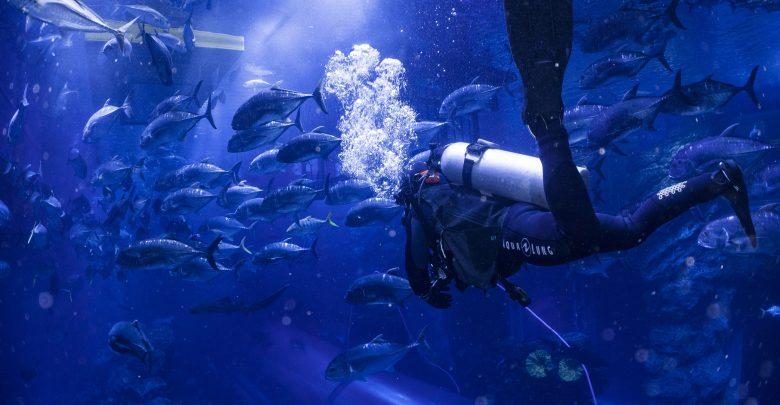 دبي أكواريوم وحديقة الحيوانات المائية تقدم خصم 25% على أبرز مغامراتها
