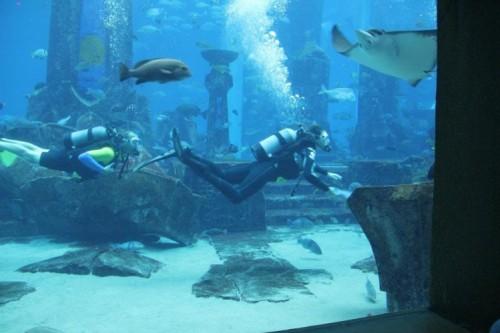 فندق أتلانتس النخلة يستضيف الناشط البيئي العالمي مايك روتزن