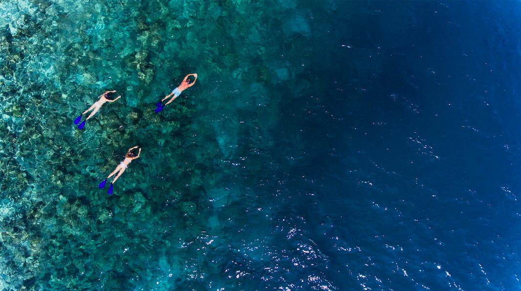منتجع فاكارو المالديف يقدم تجربة الغوص مع أسماك المانتاراي