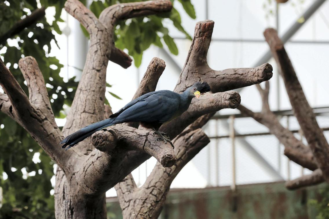 أحد أغرب الطيور  في الحديقة